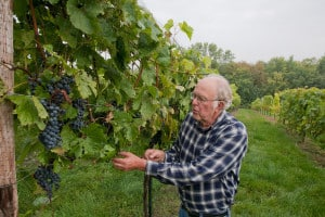 Marvin Seppanen, 'Frontenac' grape